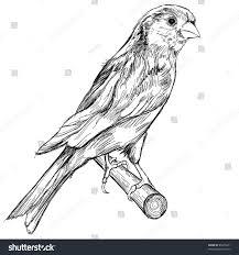 black white sketch canary bird sitting stock illustration 85665571