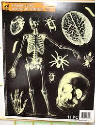 cheap halloween skeletons skulls bones shrunken head pirate theme