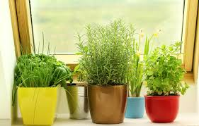 7 easy tips to make your indoor herb garden a success we