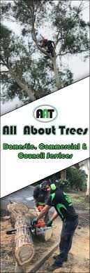 aat all about trees tree stump removal services seven