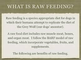benefits of raw feeding for dogs