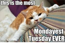 Monday Cat Meme - this is the most monday est tuesday ever cat addicts anony mouse