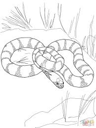 california king snake coloring page free printable coloring pages