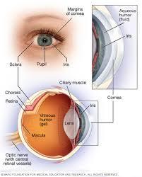 Anatomy Of The Eye Retinoblastoma Symptoms And Causes Mayo Clinic