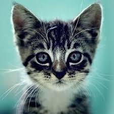 cats and kittens catsnkittys twitter