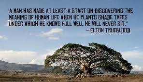 quotes about trees yourhappyplaceblog