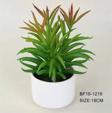 Indoor Tropical Plants For Sale - list manufacturers of tropical plants sale buy tropical plants