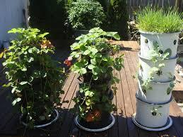 Diy Vertical Herb Garden Grande Vertical Herb Garden In Diy Vertical Garden Plus Burpee