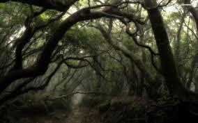 forest wallpaper qygjxz