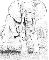 elephant mandala coloring pages color pages stress relief on