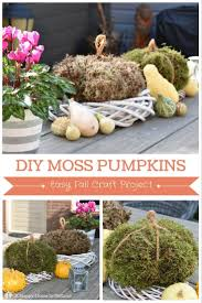 Art And Craft Ideas For Home Decor Step By Step 100 Best Moss Wonderful For A Close Up Look Images On Pinterest