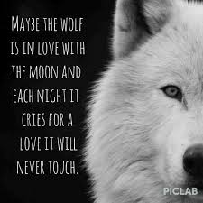 Lone Wolf Meme - lone wolf quotes wolf quotes about strength awesome wolf quotes