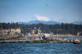 Puget Sound Tide Table Officials Try To Blame Eclipse Tides For Atlantic Salmon Spill In