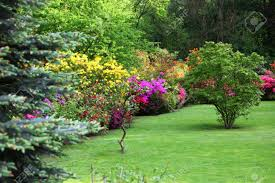 Pink Spring Flowering Shrubs - colourful flowering shrubs in a spring garden in shades of yellow