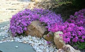 garden walk fairies gnomes and flower garden design hometalk