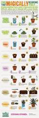 best 25 indoor garden ideas only on pinterest