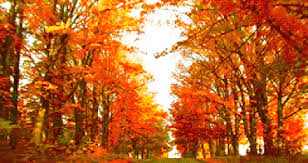 fall autumn fall autumn gif find share on giphy
