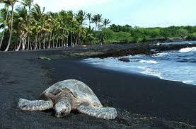 black sand beach hawaii punalu u black sand beach aloha valley