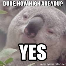 How High Are You Meme - dude how high are you yes stoned koala bear meme generator