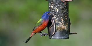 Backyard Wild Birds Wild Bird Food Guide What To Feed Birds Backyard Chirper
