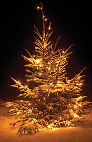 Decorate Christmas Tree Outside by 94 Best Christmas Trees Make Me Happy Images On Pinterest