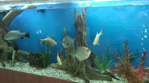 decorating aquariums universal