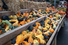 photos common pumpkins gourds for fall decorating