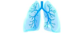 Human Anatomy Respiratory System Respiratory System Myvmc