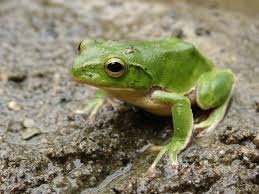 strike two frogs exodus 8 1 15 kdmanestreet
