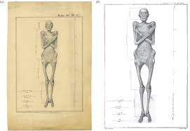 He Made Accurate Drawings Of The Human Anatomy An Autopsic Art Drawings Of U0027dr Granville U0027s Mummy U0027 In The Royal