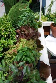 23 best container gardening images on pinterest container garden