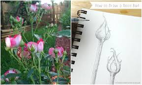 miss danielle renee how to draw a rose bud