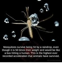 Mosquito Memes - mosquitoes survive being hit by a raindrop even though it is 50