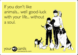 Crazy Dog Lady Meme - if you don t like animals well good luck with your life