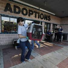 lexus of austin employees charity navigator touts nonprofits in wake of hurricane harvey