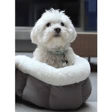 Cuddle Cup Dog Bed Best Friends By Sheri Round Bolster Winner Dog Bed Free Shipping