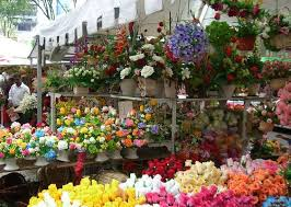 flowers for sale sale of cut flowers springs up in kashmir hortibiz
