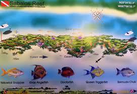 Map Of Playa Del Carmen Mexico by Dive Center At Allegro Playacar Pro Dive Mexico