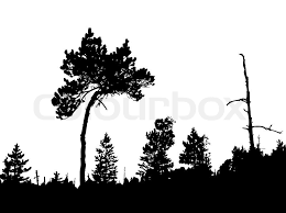 silhouette of the crooked pine in wood stock vector colourbox