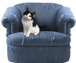 gatti divani ambulatorio veterinario orsamaggiore album dei pazienti