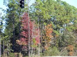 november 2007 seasons in the soil