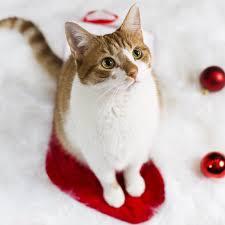 lady dinah u0027s u2013 lady dinah u0027s cat emporium