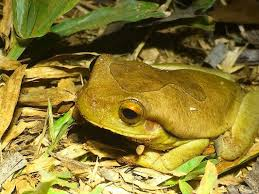 category amphibians nature my view