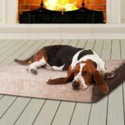 Medium Sized Dog Beds Dog Beds For Medium Sized Dogs