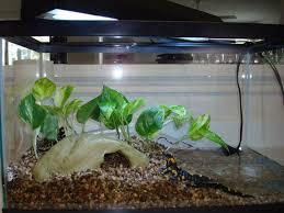 terrarium design marvellous terrarium enclosure reptile