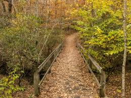 Tennessee nature activities images Fall creek falls state park tennessee state parks jpg