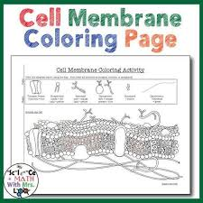 cell membrane coloring worksheet answer key 1 free printable