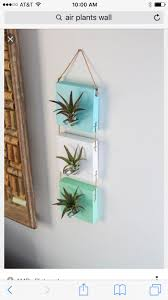 Air Plant Wall Holder 57 Best Airplants Images On Pinterest Air Plants Indoor Plants