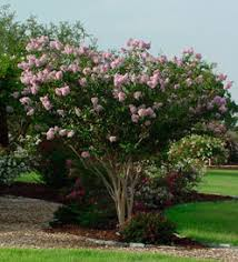 fall ideal for planting trees and shrubs