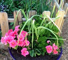 creative container gardening tips ramblings from a desert garden